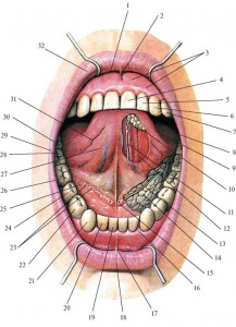 Изменение слизистой при сердечно-сосудистых заболеваниях